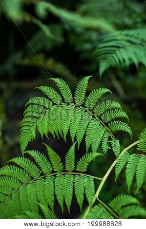 Fern branch over the natural background botanical garden vertical photo