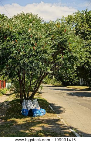 Packages with garbage near a deciduous tree near the road