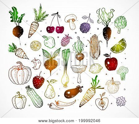 Colored Doodle fruits and vegetables isolated on white background. Vector sketch illustration of healthy foo