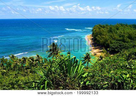 Lush green tropical forest surrounding Kee Beach taken at the Napali Coast in Kauai, HI