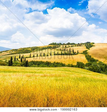 winding road flanked with cypresses under a cloudy summer sky in crete senesi near Siena in Tuscany Italy