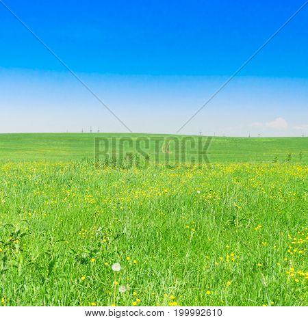 Vibrant Nature Grass Land