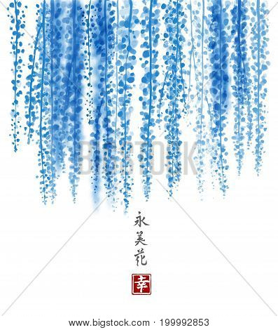 Blue Wisteria hand drawn with ink on white background. Contains hieroglyph - happiness, eternity, beauty, flower. Traditional oriental ink painting sumi-e, u-sin, go-hua. Bunches of flowers.