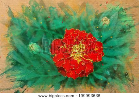 Watercolor pattern of a red marigold flower illustration