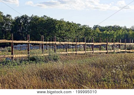 Wooden gray fence in a dry grass on a meadow against a background of trees and sky