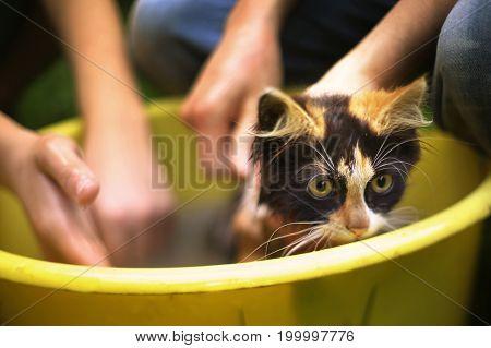 Kids Wash Kitten In Basin