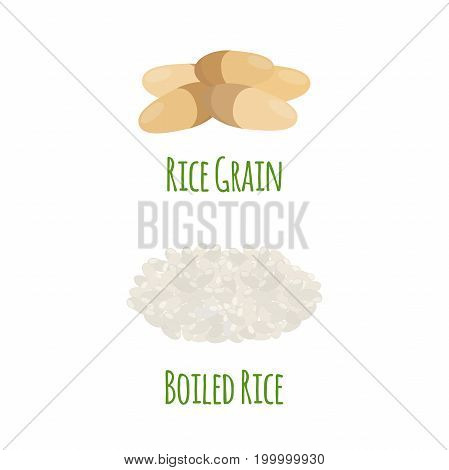 Rice, vegetarian food. Green harvest, oryza wheat. Raw rice seeds. Made in cartoon flat style. Vector illustration