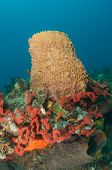 Red Finger Sponges and Barrel Sponges Growing in Close Proximity poster