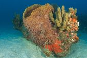 Barrel Sponge and Organ Pipe Sponges on a small coral outcropping in the sand isolated from the reef. poster