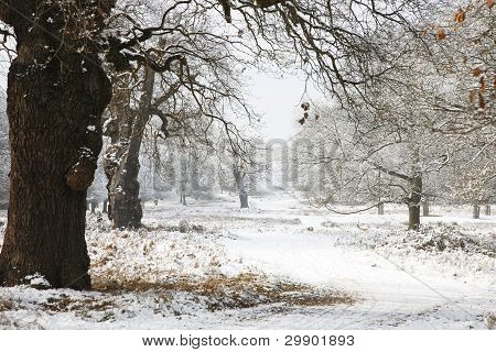 Winter Landscape Of Richmond Park