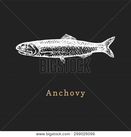 Illustration Of Anchovy On Black Background. Fish Sketch In Vector. Drawn Seafood In Engraving Style