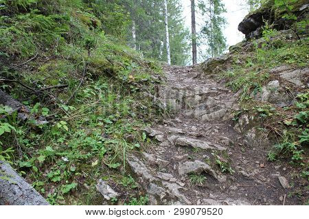 photo mountain paths in the forest.way with a difficult descent and ascent.path of sand and stones.around the forest.lie fallen trees.beautiful nature of Russia in the Urals in the Perm region poster