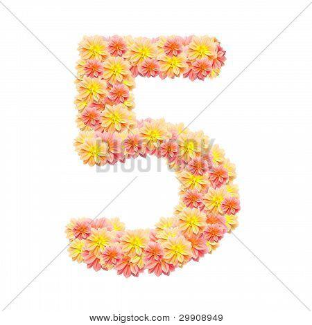 5,flower Alphabet Isolated On White