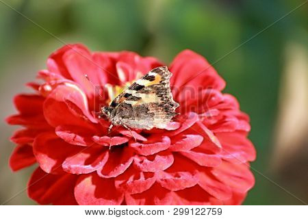 Butterflies - Are Spread All Over The World Except Antarctica