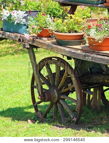 Old Wooden Wagon With Potted Flowers In Summer
