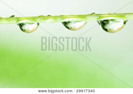 macro of water droplets; shallow (DOF); Series C2 poster