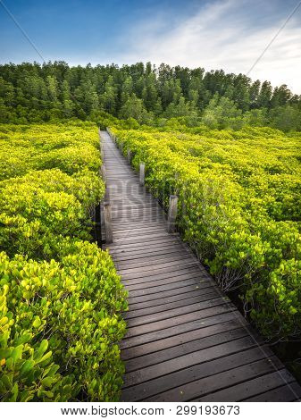 The Wood Bridge In Mangrove Forest At Nature Preserve At Tung Prong Thong, Rayong Province, Thailand