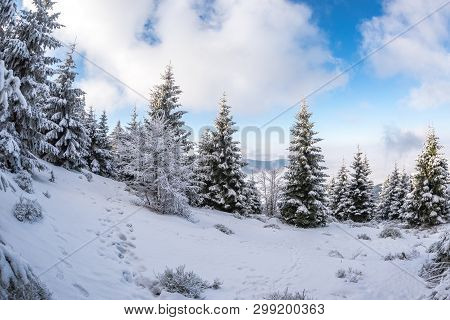 Frozen Trees, Fresh Snow In Beskydy Mountains, Travny Peak, Czech Republic