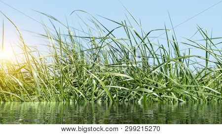 Grass On The Dike On The Elbe In Germany