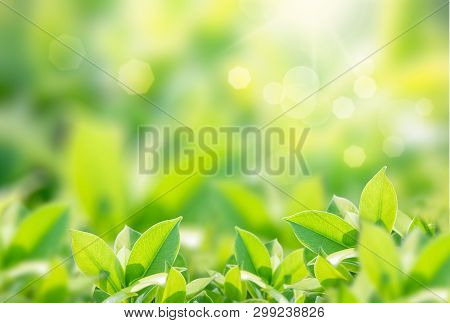 Closeup Nature View Of Green Leaf On Blurred Greenery Background In Garden With Copy Space Using As