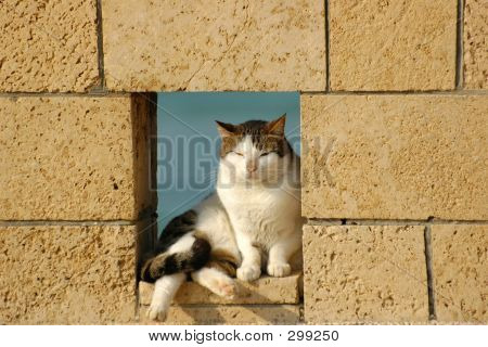 Cat In Fence