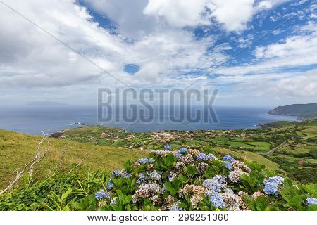 Hydrangeas Frame The View Looking Down At Ponta Delgada On The Island Of Flores In The Azores.