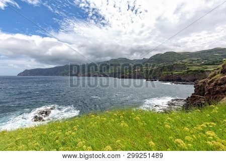 Yellow Flowers Blooming On The Coastline On The Outskirts Of Ponta Delgada On The Island Of Flores I