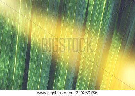 Texture Of Green Nature Leaf In Garden, Closeup Natural Green Plants Background