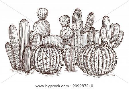 Hand Drawn Cactus. Western Desert Cacti Mexican Plants In Sketch Style Vector Illustration. Cactus M
