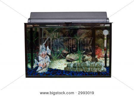 Isolated Fishtank