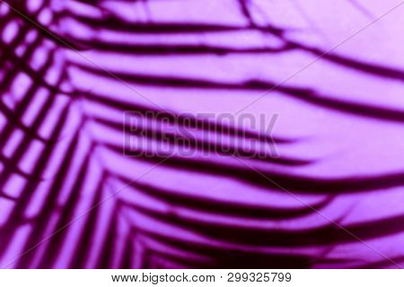 Abstract Blurred Background Of Shadows Palm Leaves On A Wall Of Resort Hotel In Neon Purple Color.
