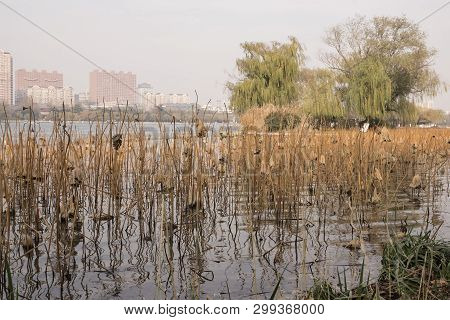 Lake In Park In Jinan, Shandong Province, China On Autumn Sunny Day