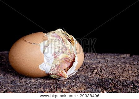 Baby chick hatching out of a brown egg