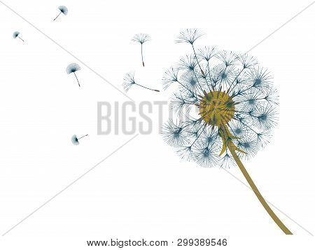Dandelion Background For Your Design. The Wind Blows Dandelion Seeds. Template For Posters, Wallpape