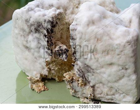 Mold inside bread. Mold spores, macro. Penicillium. Aspergillus poster