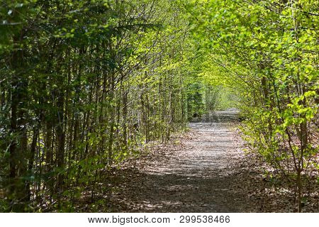 Path Deep Forest In Spring Time, Landscape