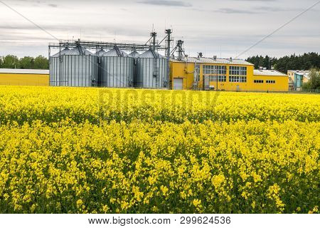 Field Of Flower Of Rapeseed, Canola Colza In Brassica Napus On Agro-processing Plant For Processing