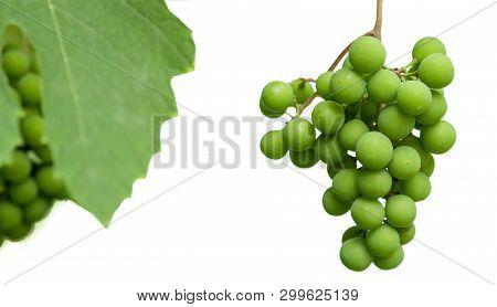 Unripe clusters of grapes with leaves isolated on a white background. Selective focus. poster
