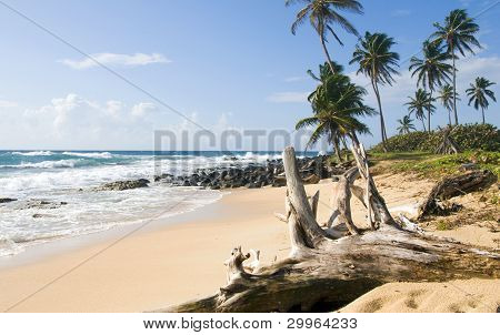 Palm Trees Undeveloped Beach Content Point South End Corn Island Nicaragua Caribbean Sea