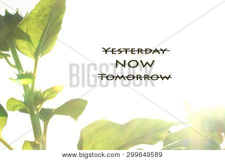 Inspirational Quote- Forget Yesterday, Live In The Now, Forget Tomorrow. Natural Leaves Frame From N
