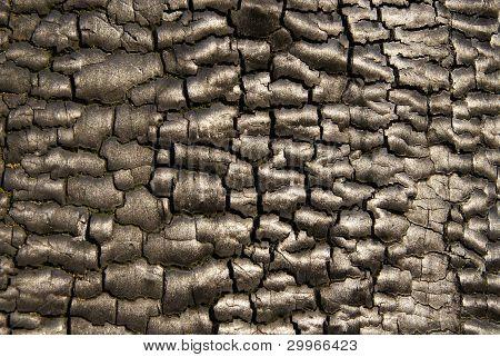Background of burnt bark
