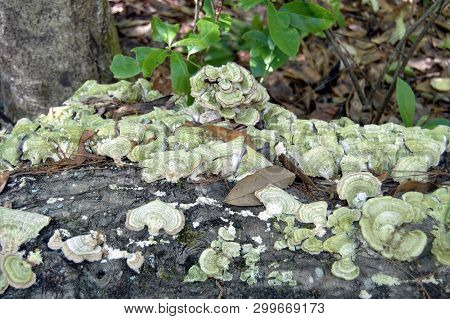 Tree Trunk Log With Growing Fungus In Woods