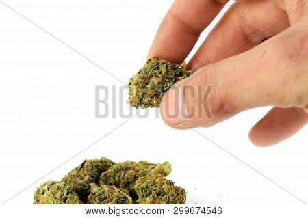Handling Weed Buds