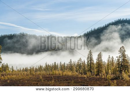Forest Mist, Pine Trees In Fog, Forest Mist, Pine Trees In Fog,