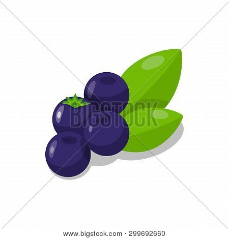 Delicious Blueberries Cartoon Vector Illustration. Sweet Berry Dessert Flat Drawing. Vitamin Diet. O