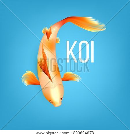 Oriental White Koi Fish With Orange Spots Vector. Kohaku Fish Is Symbol Of Luck, Prosperity And Good