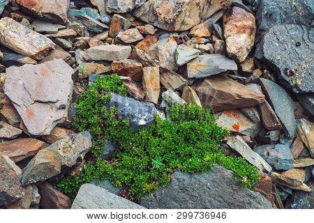 Multicolored Boulder Stream. Loose Rock Close Up. Plants Among Randomly Scattered Stones. Amazing De