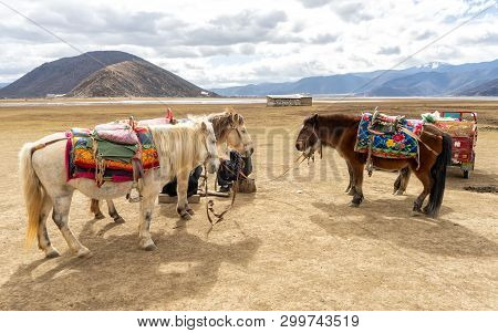 Horses In Shangri-la, China. In Many Places Of Shangri-la, The Most Beautiful Scenery Cannot Be Admi