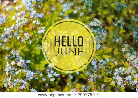 Banner Hello June. Text On The Photo. Text Hello June. New Month. New Season. Summer Month. Text On