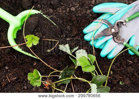 Spring Work In The Garden. Garden Tools, Pruner Gloves And Shovel On Fresh Ground. Preparation In Pl